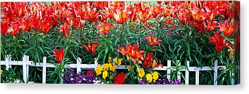 Flowers In Bloom, Alaska, Usa Canvas Print by Panoramic Images