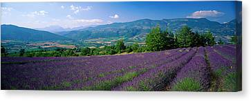 Flowers In Field, Lavender Field, La Canvas Print by Panoramic Images