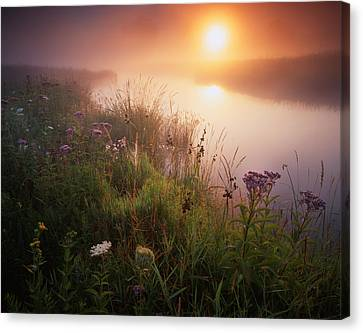 Flowers In The Fog Canvas Print by Ray Mathis