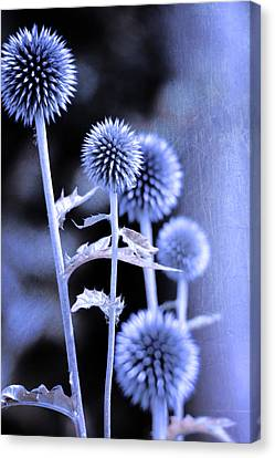 Flowers In The Metal Canvas Print by Toppart Sweden