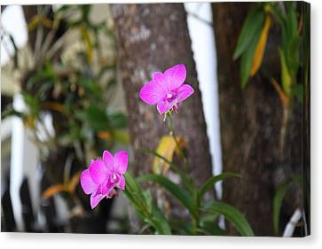 Flowers - Panviman Chiang Mai Spa And Resort - Chiang Mai Thailand - 01131 Canvas Print by DC Photographer
