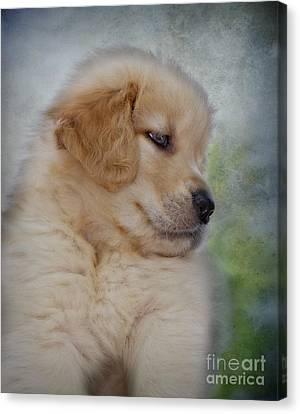 Fluffy Golden Puppy Canvas Print by Susan Candelario