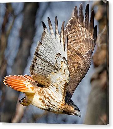 Fly Away Canvas Print by Bill Wakeley