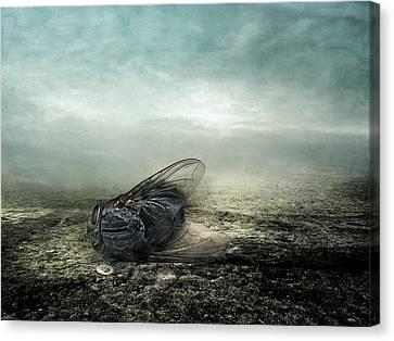 Fly Canvas Print by Johan Lilja