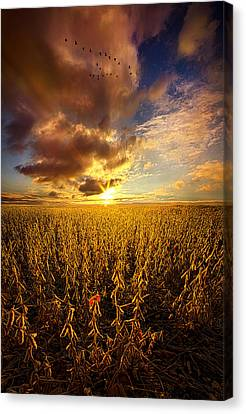 Fly Over Country Canvas Print by Phil Koch