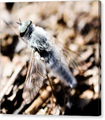 Fly Canvas Print by Toppart Sweden