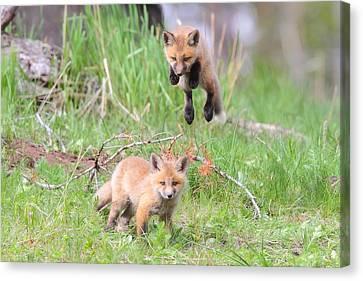Flying Fox Canvas Print by Steve Hinch