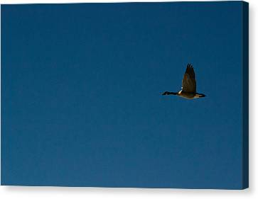 Flying Goose Canvas Print by Matt Radcliffe