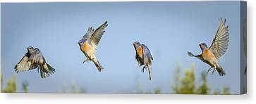 Flying Canvas Print by Jean Noren