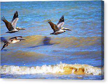 Flying Low Canvas Print by Jason Politte