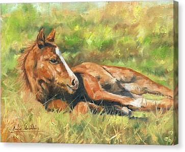 Foal Canvas Print by David Stribbling