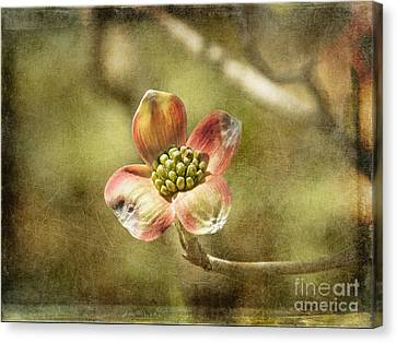 Focus On Dogwood Canvas Print by Terry Rowe