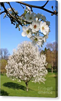 Focus On Spring Canvas Print by Jay Nodianos