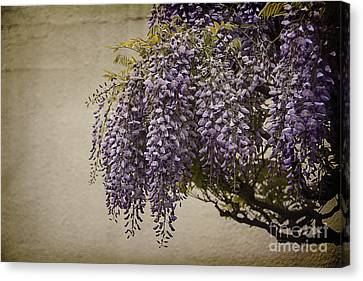 Focus On Wisteria Canvas Print by Terry Rowe