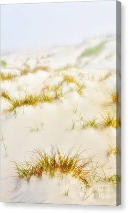 Fog Sand And Dune Grass - Outer Banks Canvas Print by Dan Carmichael