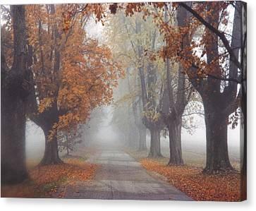 Foggy Driveway Canvas Print by Wendell Thompson
