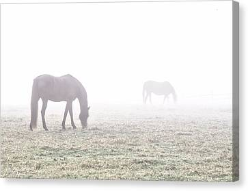 Foggy Morning  In Flourtown Canvas Print by Bill Cannon