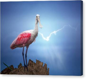 Foggy Morning Spoonbill Canvas Print by Mark Andrew Thomas