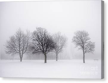 Foggy Park With Winter Trees Canvas Print by Elena Elisseeva