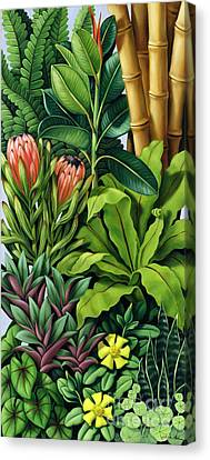 Foliage IIi Canvas Print by Catherine Abel