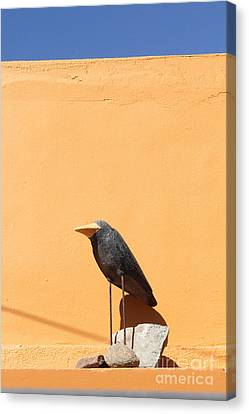 Folk Art Crow Todos Santos Canvas Print by Linda Queally