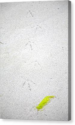 Footprints Canvas Print by Graham Foulkes