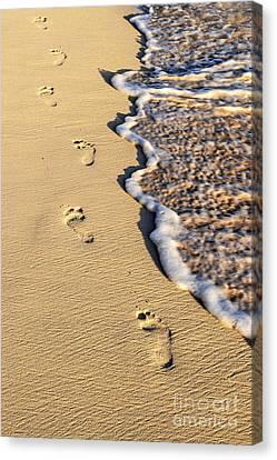 Footprints On Beach Canvas Print by Elena Elisseeva