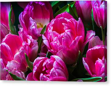 For You - Featured 3 Canvas Print by Alexander Senin