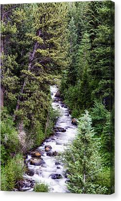 Forest Cascade Canvas Print by The Forests Edge Photography - Diane Sandoval