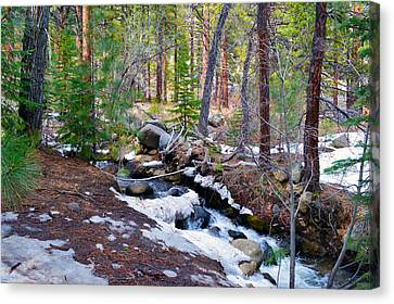 Forest Creek 4 Canvas Print by Brent Dolliver