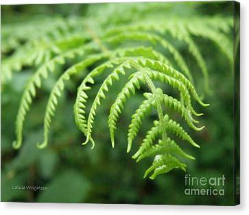 Forest Fern Canvas Print by Lainie Wrightson