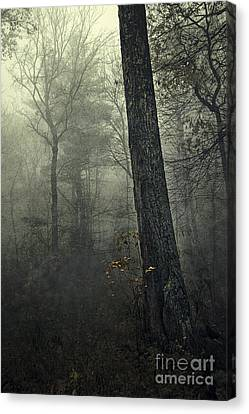 Forest Canvas Print by HD Connelly