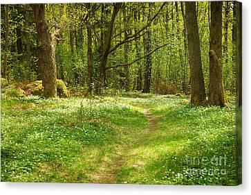 Forest In Springtime Canvas Print by Lutz Baar