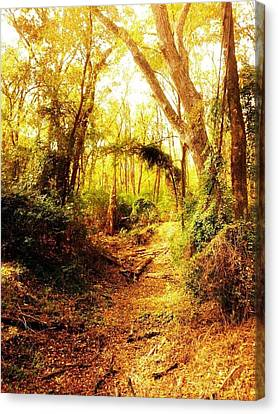 Forest Canvas Print by Kristin Smith