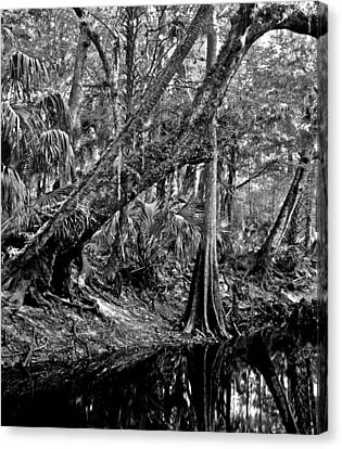 Forest On The Econ River Canvas Print by Chris  Kusik
