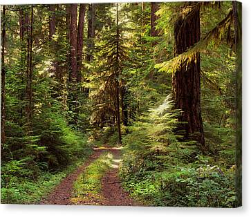 Forest Path 4 Canvas Print by Leland D Howard