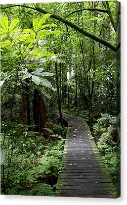 Forest Path Canvas Print by Les Cunliffe
