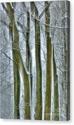 Forest Sentinels Canvas Print by David Birchall