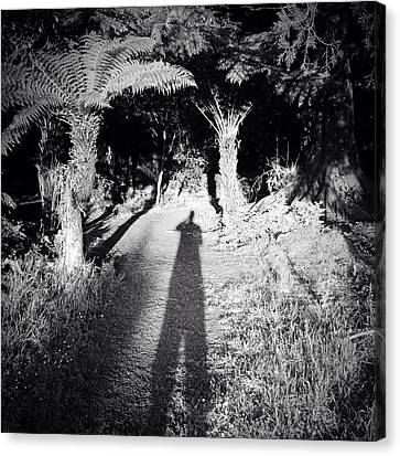 Forest Shadow Canvas Print by Les Cunliffe