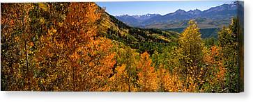 Forest, Silverton, San Juan County Canvas Print by Panoramic Images