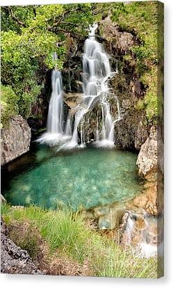 Forest Waterfall Canvas Print by Adrian Evans