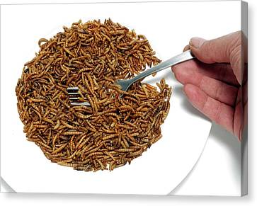 Fork With Plate Of Mealworm Canvas Print by Victor De Schwanberg