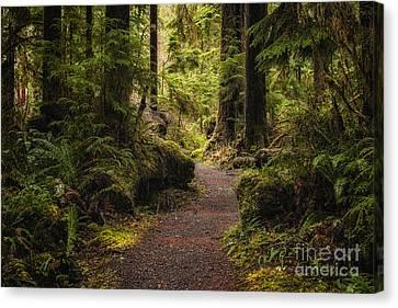 Forest Walk  Canvas Print by Jennifer Magallon
