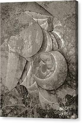 Fossilized Shell - B And W Canvas Print by Klara Acel