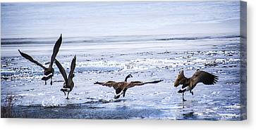 Four Geese Taking Flioght Canvas Print by Marilyn Hunt
