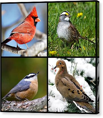 Four Seasons Birds Square Canvas Print by Christina Rollo