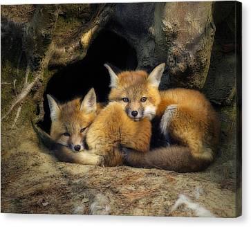 Best Friends - Fox Kits At Rest Canvas Print by John Vose