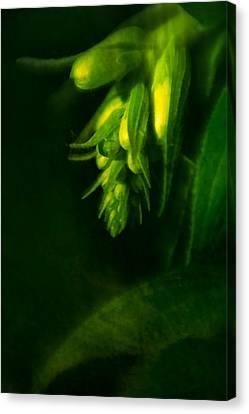 Foxglove Buds Canvas Print by  Onyonet  Photo Studios