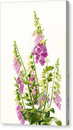 Foxgloves With White Background Canvas Print by Sharon Freeman