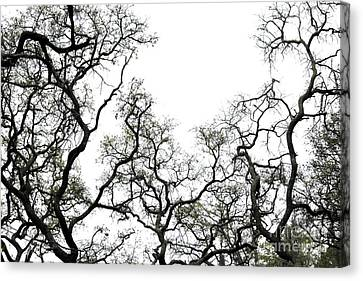 Fractal Branches Canvas Print by Theresa Willingham